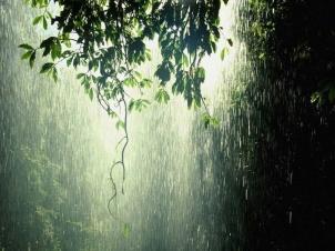 lluviaselva
